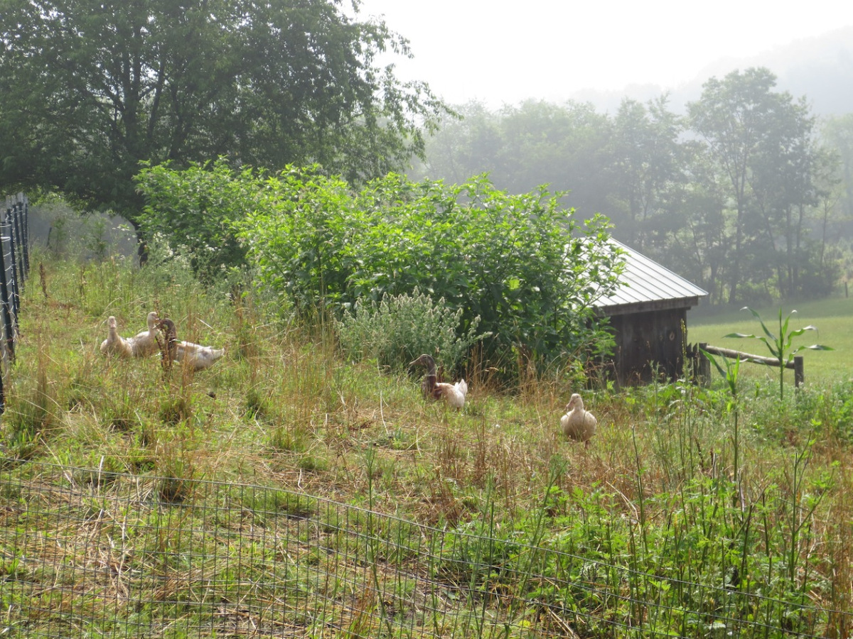 flock on hill copy.jpg