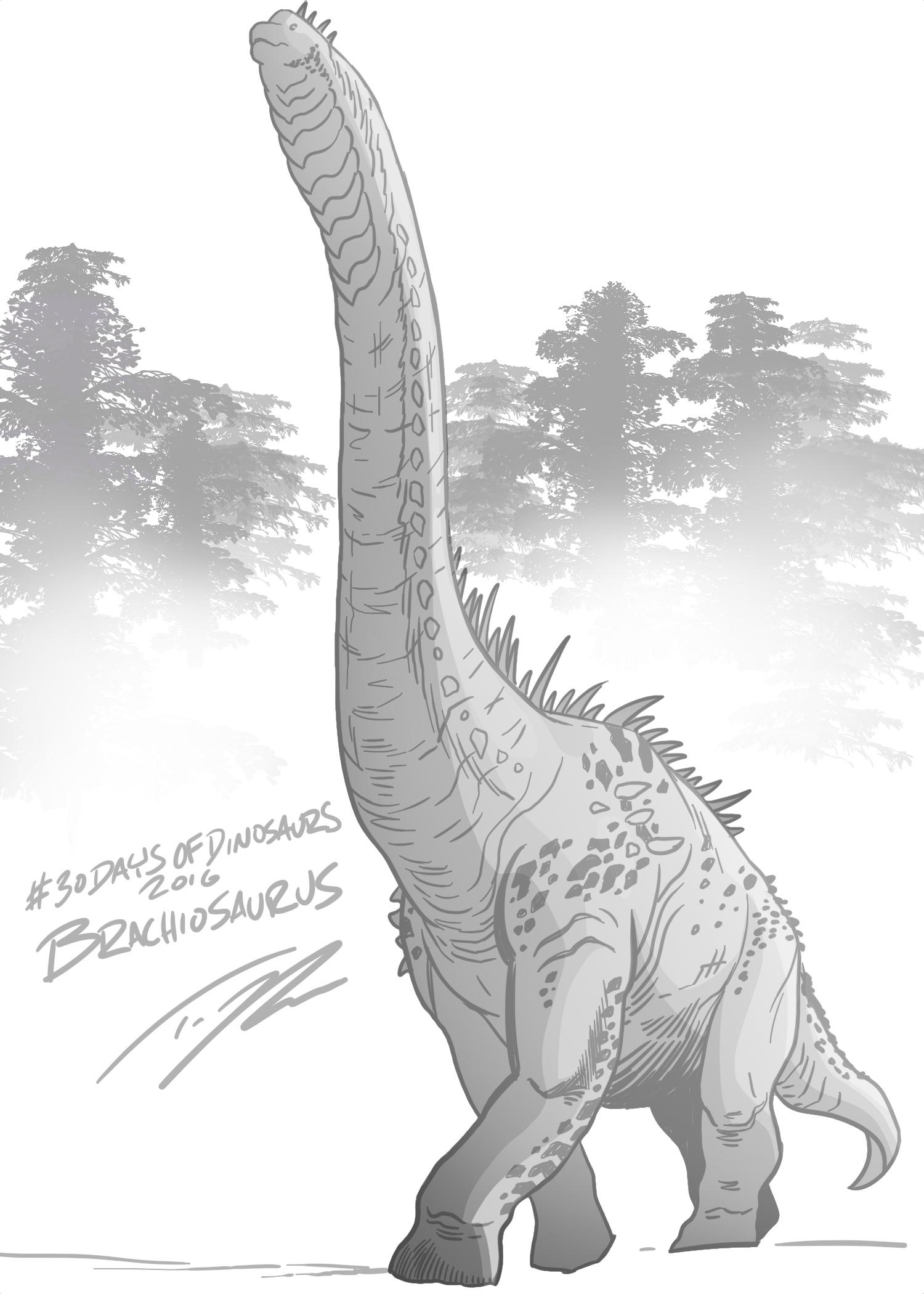 BrachiosaurusTedRechlin