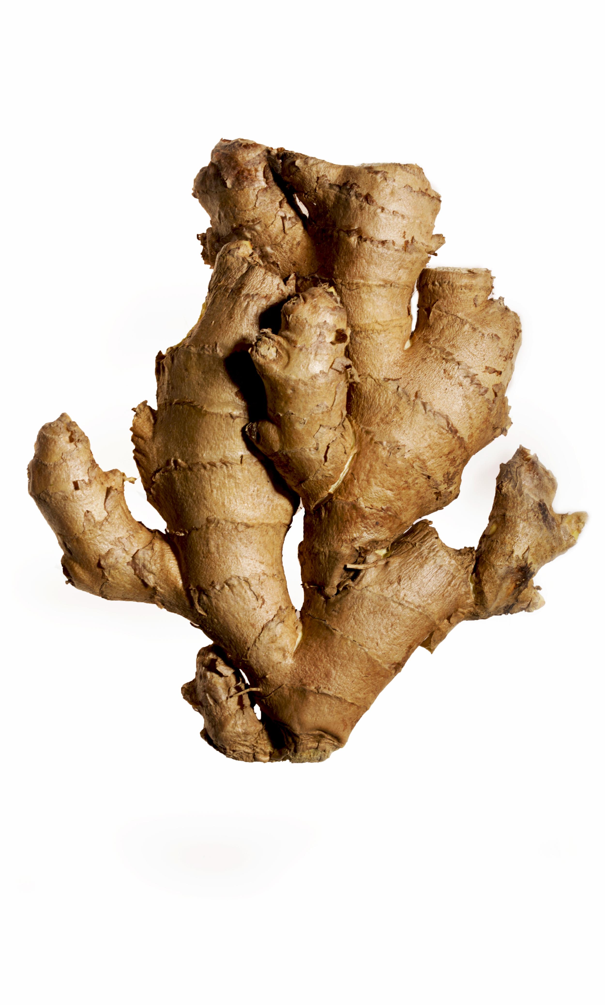 GingerOnWhite01.jpg