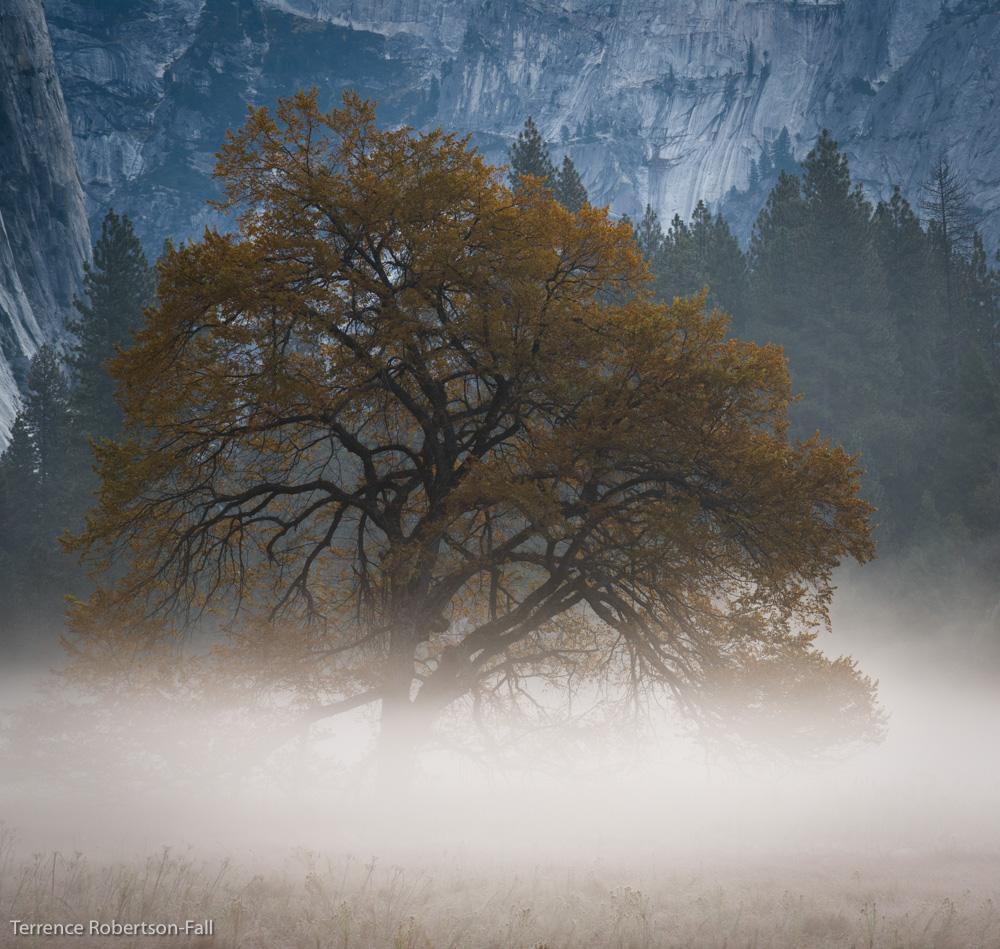 Tranquility - oak tree in Cook's Meadow, Yosemite National Park by Terrence Robertson-Fall
