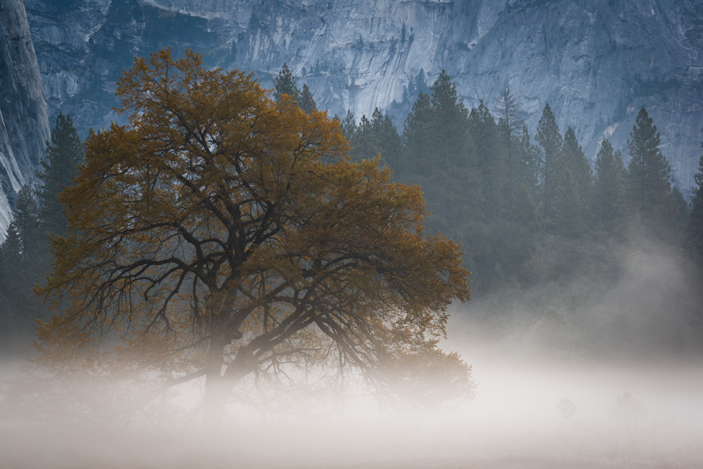 Tranquility.  Photograph by Terrence Robertson-Fall.  Dawn in Cook's Meadow, Yosemite Valley.  The soft gray mist, bold bluish granite, and rusty orange leaves paint a dreamlike setting.