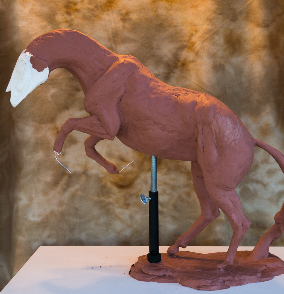 Running Free sculpture, bulking out the horse and defining the large muscle groups. Terrence Robertson-Fall Fine Art