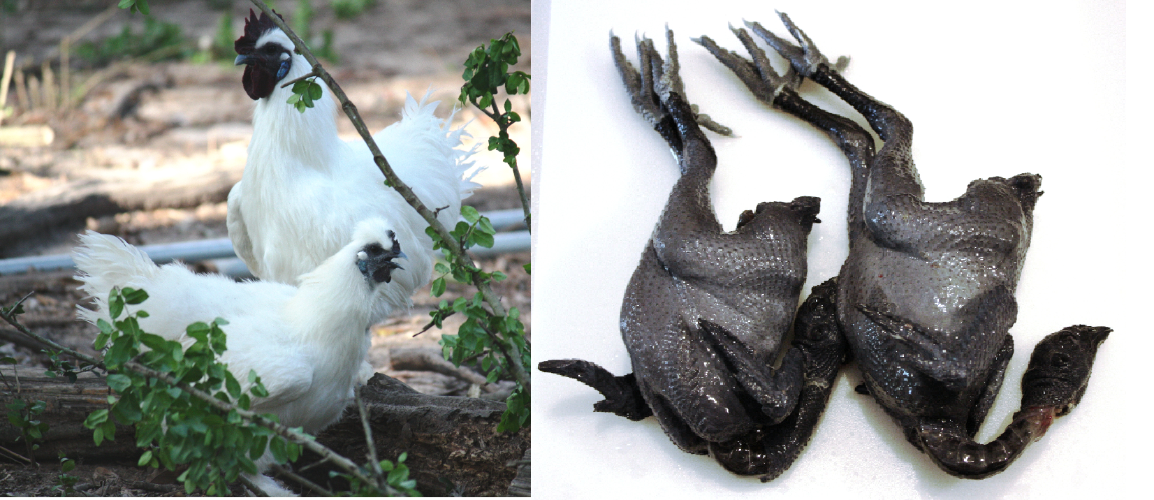 Asian bl chickens.png