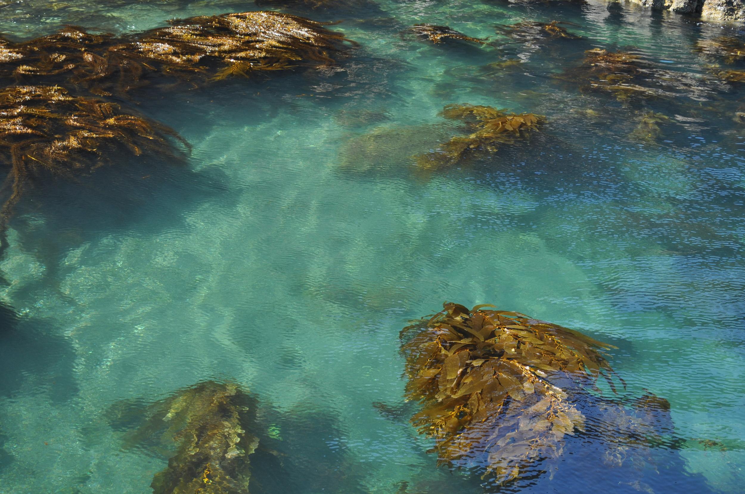 photo by Normandie Wilson kelp forest, Santa Cruz Island