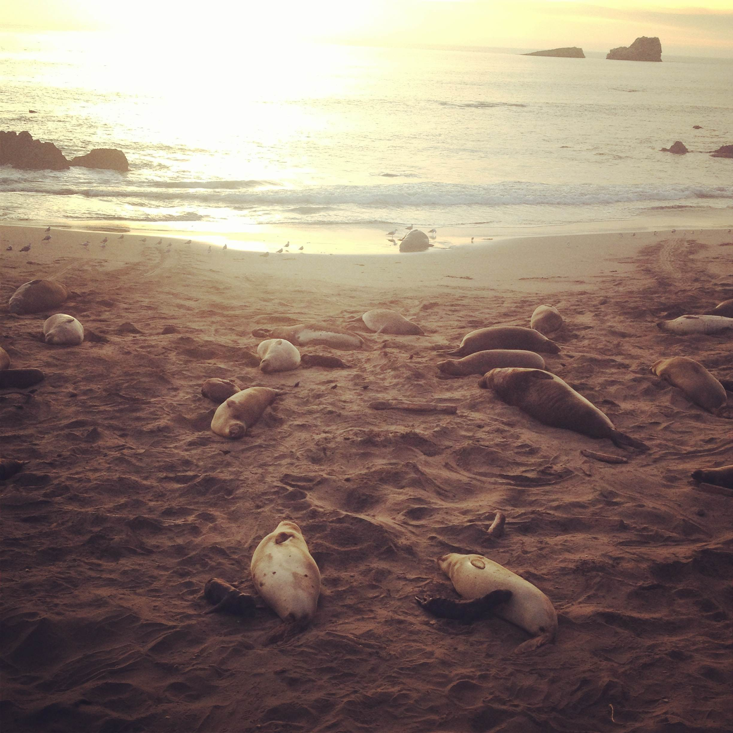 A beautiful sunset on the elephant seals