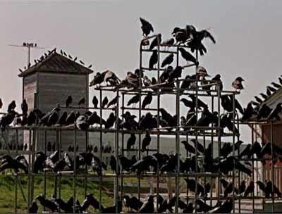 the-birds-4.jpg