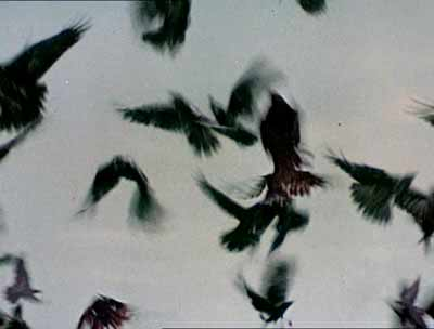 the-birds-5.jpg