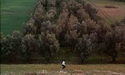 through-the-olive-trees-2.jpg