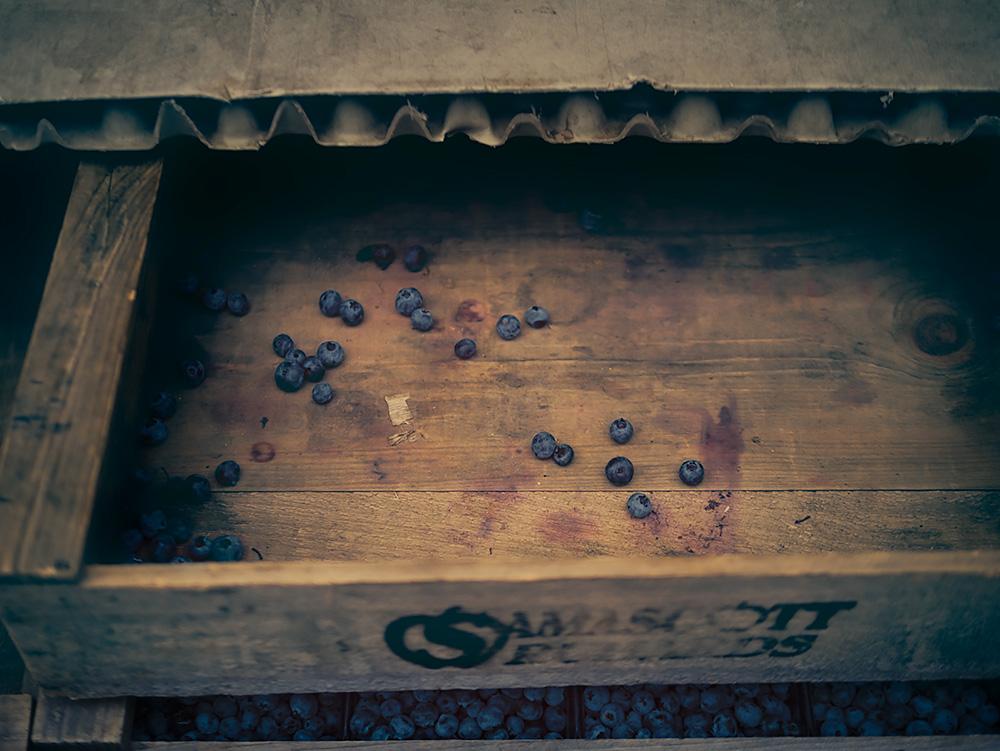 blueberries_after.jpg