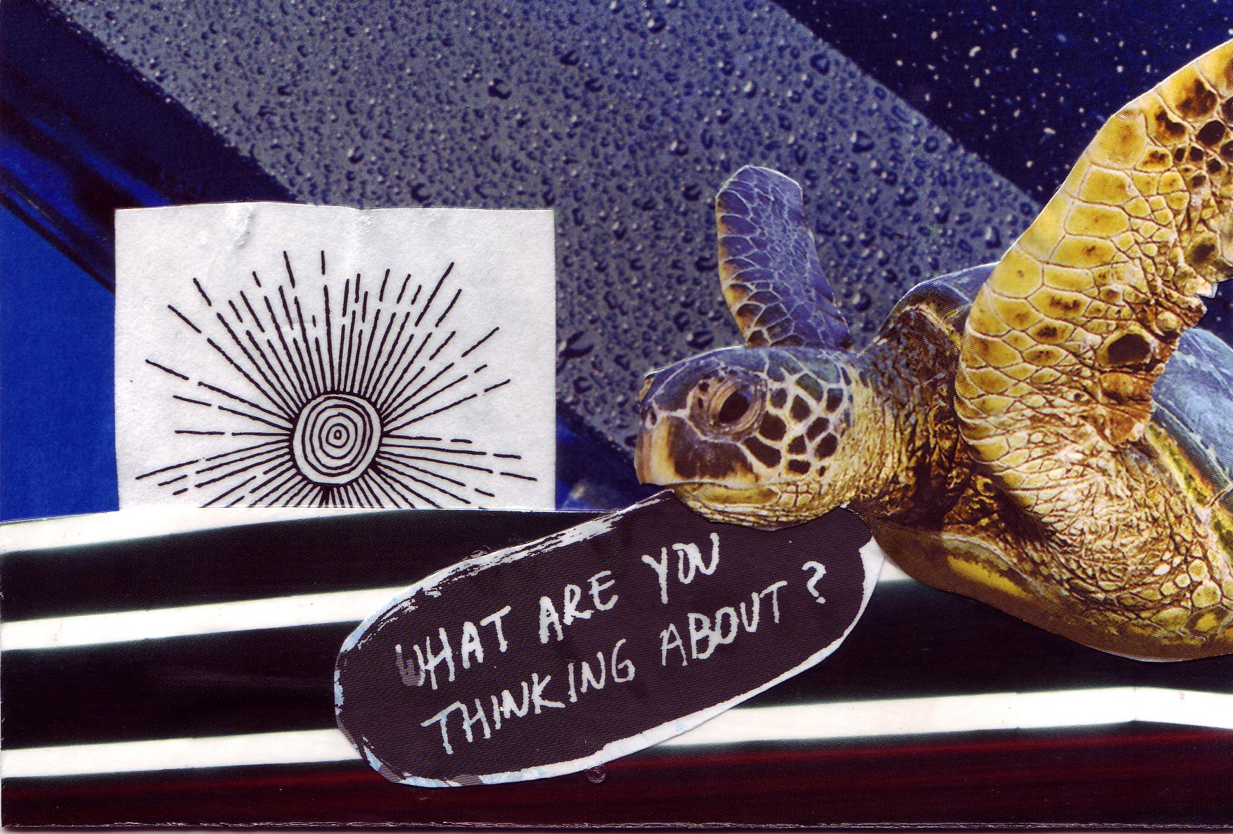 Postcards_Turtle_Web.jpg
