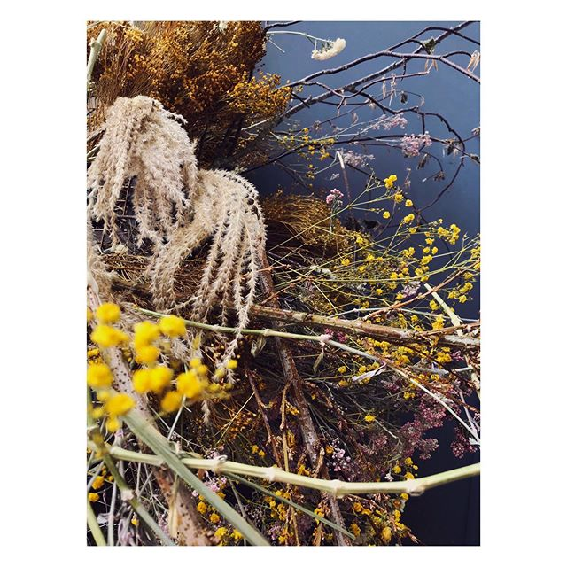 Pampas // Not usually a fan of this grass but here I think it adds another dimension 🌾#stilllife #driedflowers #floralobsession
