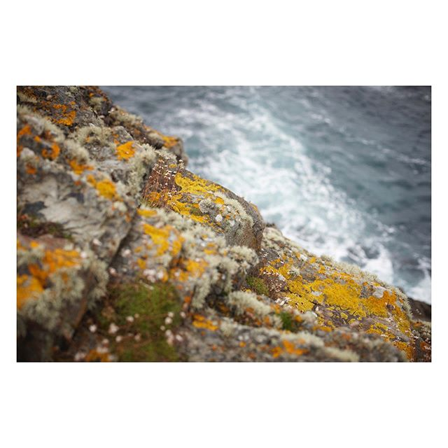 Irish Lichen // Somewhere on the coast in Ireland. Dreaming of our happy picnics here. #lichen #irishsea #travelphotography #landscapephotography #botanical