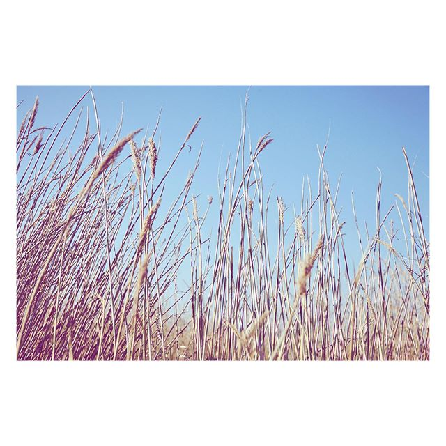 Grasses en masses // That time I went bird watching... totally hooked @altana_europe @davidprofumo #italy #birdwatching #wwf #conservation #travelphotographer #travelphotography #art #botanical