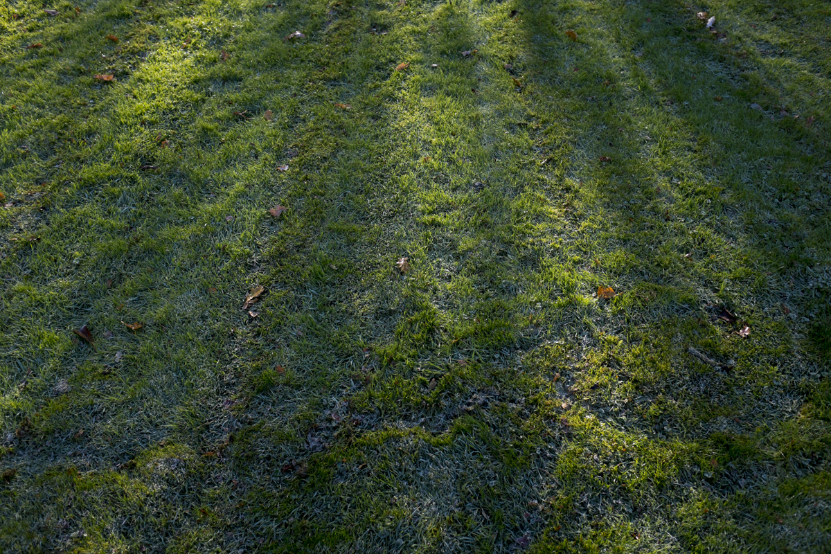 Nice grass, it had this strange blue hue in the morning with the frost still on.
