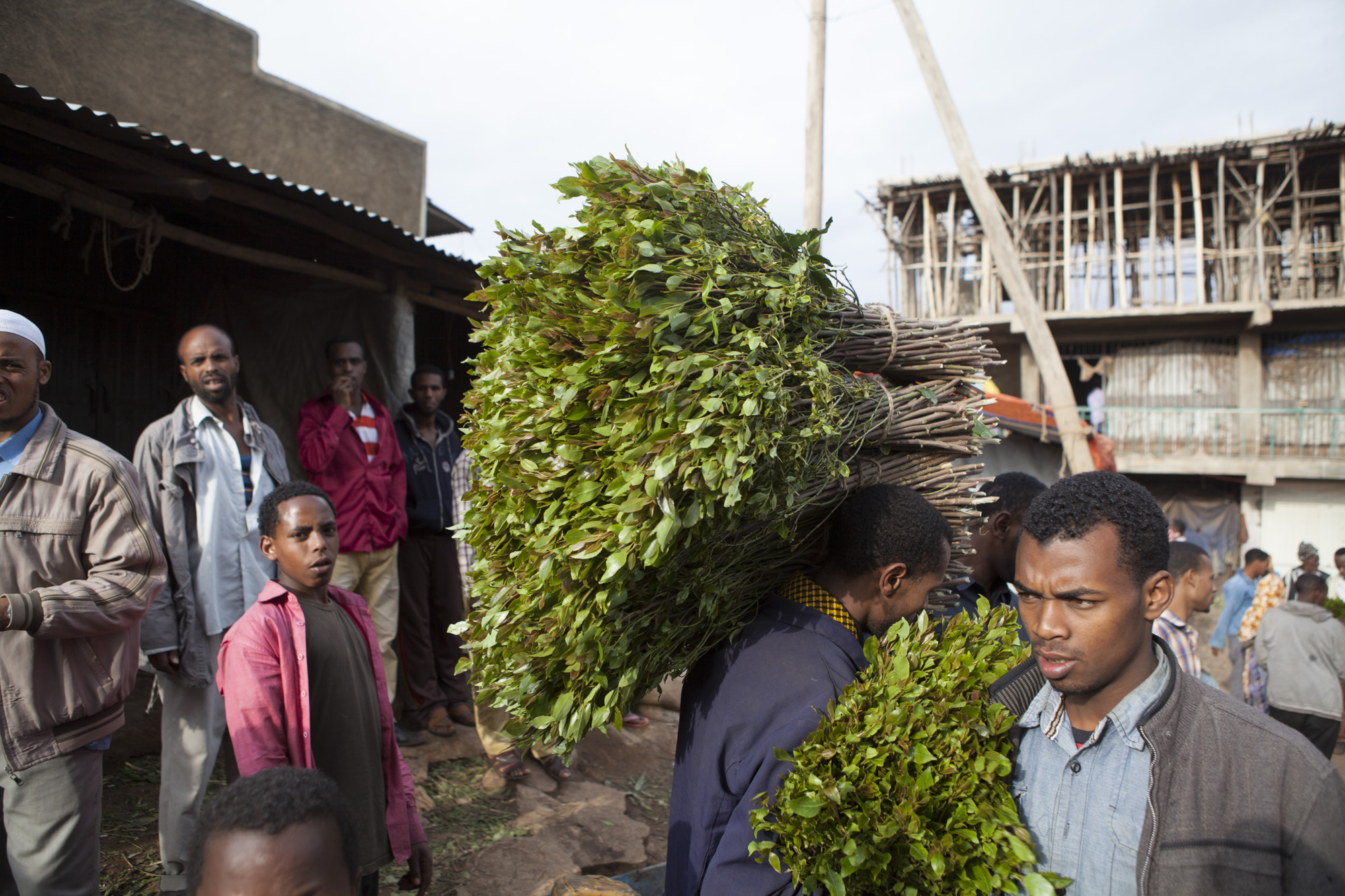 Men are pictured carrying fresh cut chat for sale in a market in Awaday, Ethiopia on 30 July 2014. Chat is the fourth largest export in Ethiopia, earning of $270 million USD annually.