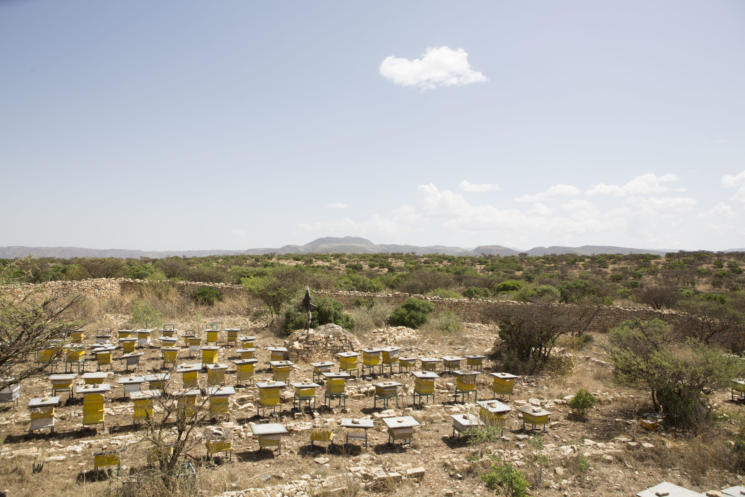 Bee hives are pictured on a small farm outside of Wukro, in the Tigray region in northern Ethiopia on 29 March 2017. Tigray is known for producing high quality honey, and is Ethiopia's major producer of honey. AFP Photo / Zacharias Abubeker