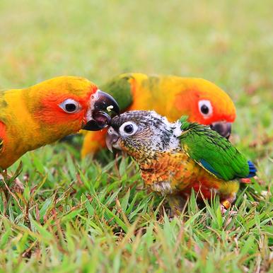 BirdBrain-31209211.jpg