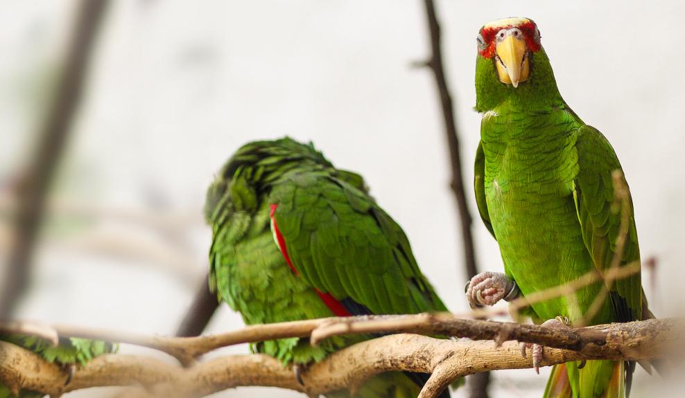 BirdBrain-32276580.jpg