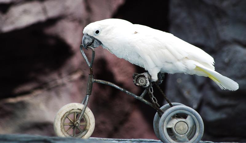 BirdBrain-19322168.jpg