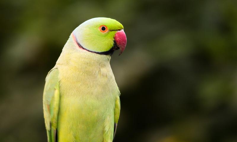 BirdBrain-23038403.jpg