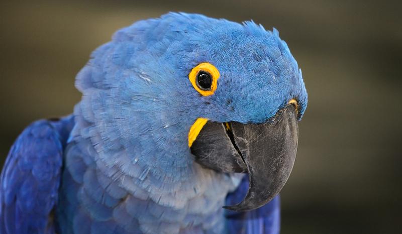 BirdBrain-6494508.jpg
