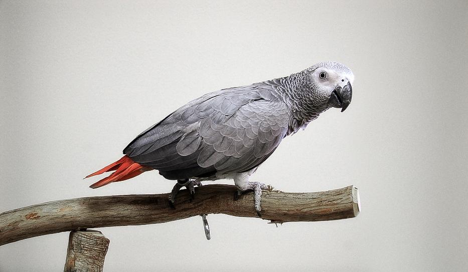BirdBrain-30201436.jpg