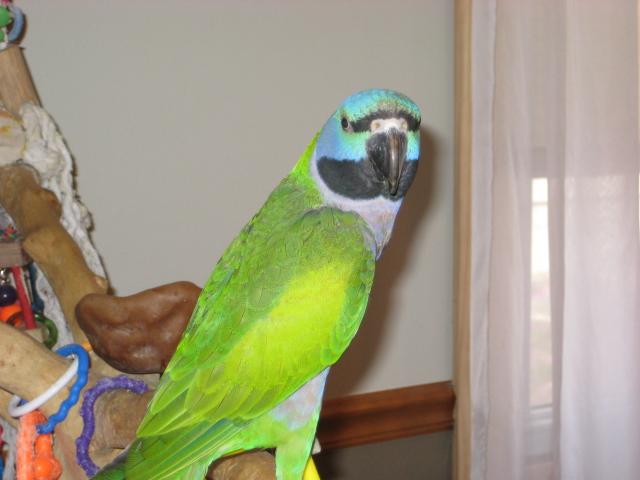 BirdBrain Parrots_11_12 004.JPG