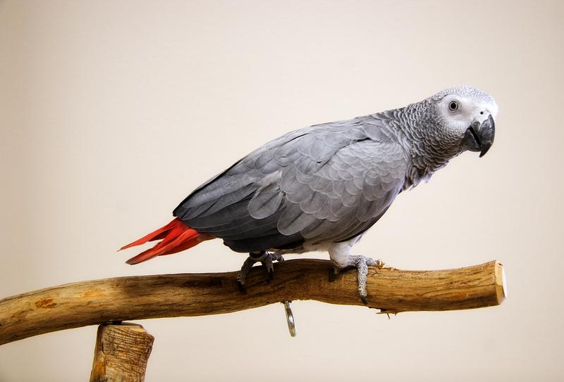 BirdBrain-22478528.jpg