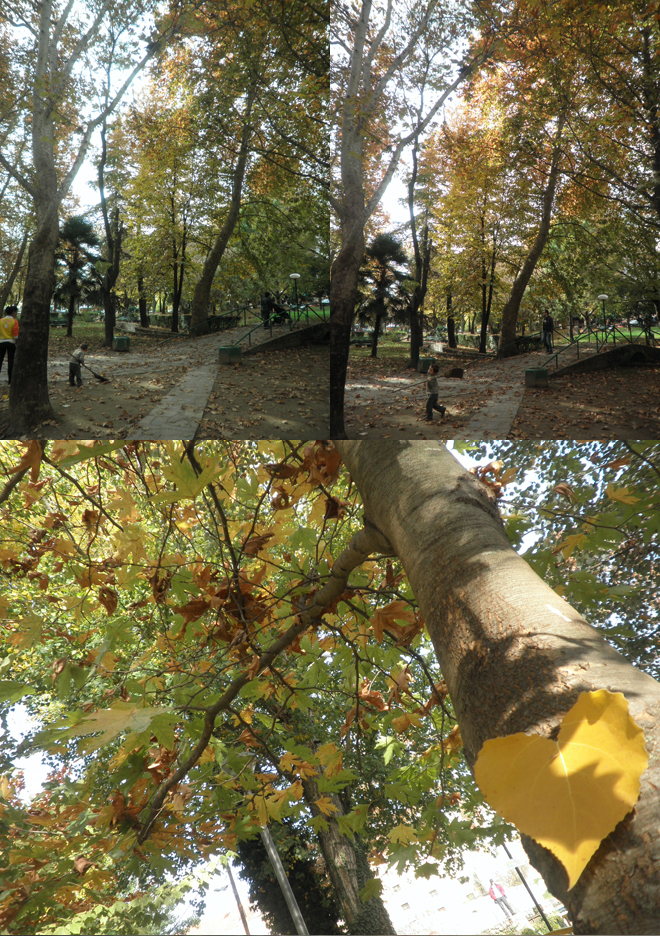 park+in+autumn.jpg