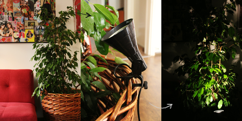 ficus+benjamin+decoration+(3).jpg