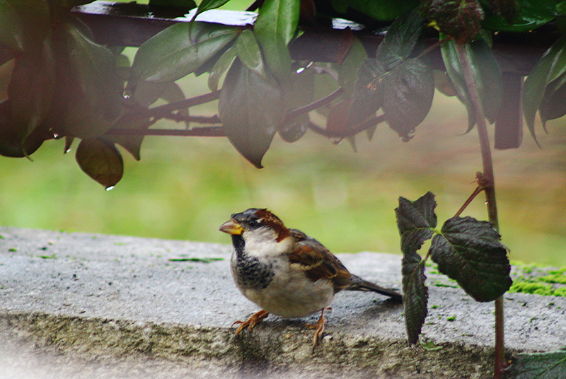 Sparrows Close Ups