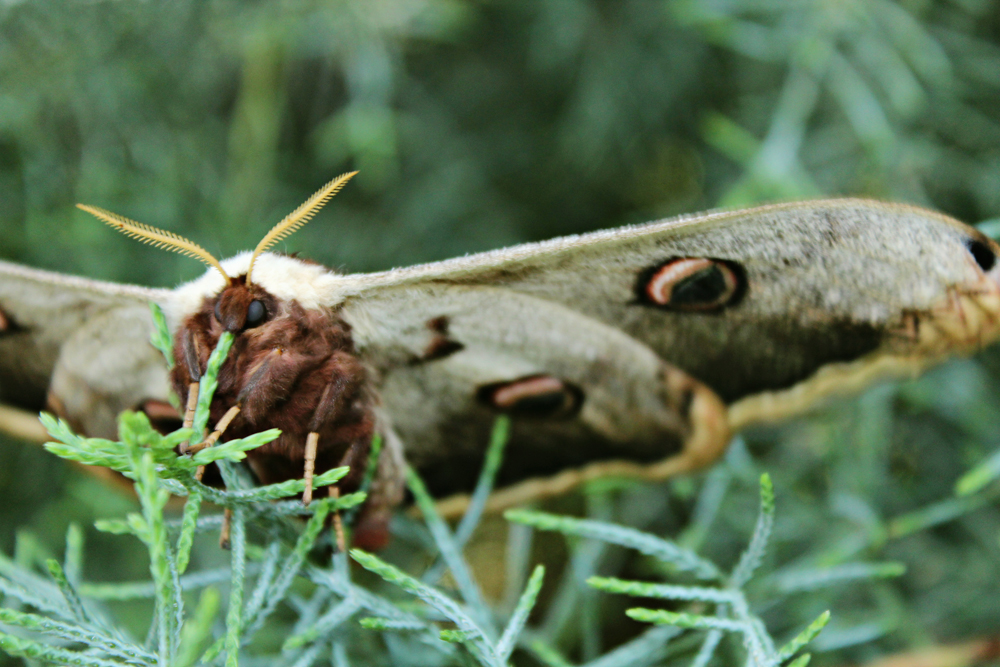 close up photos of a giant moth