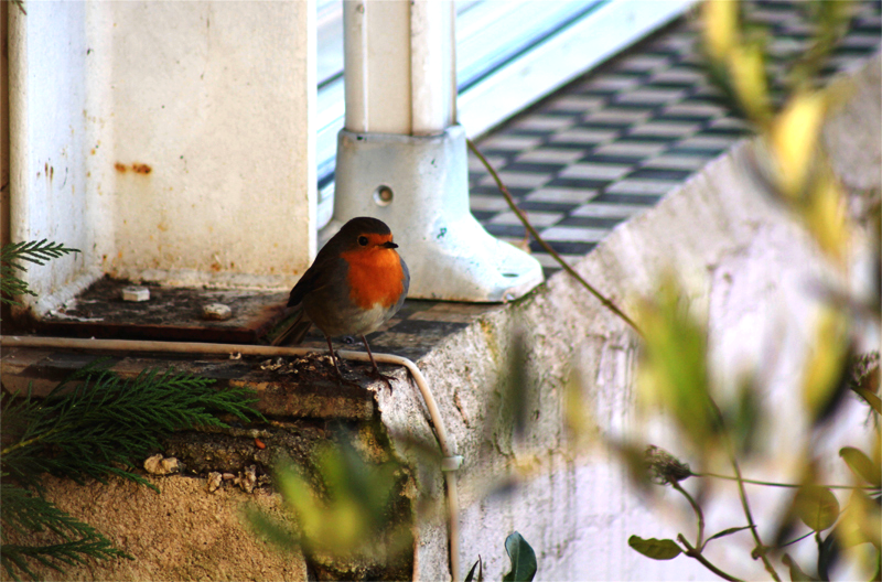 Robins Close ups (1).png