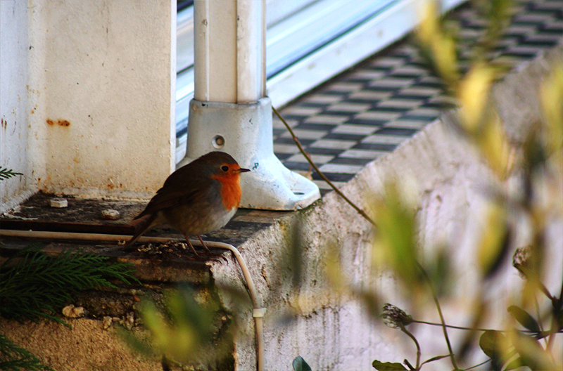 Robins Close ups (2).png