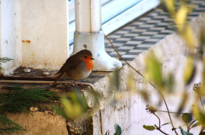 Robins Close ups (3).png
