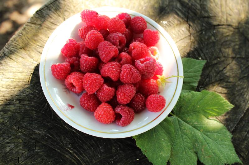 Συγκομιδή φράουλας, φραμπουάζ, βατόμουρων και άλλων μούρων