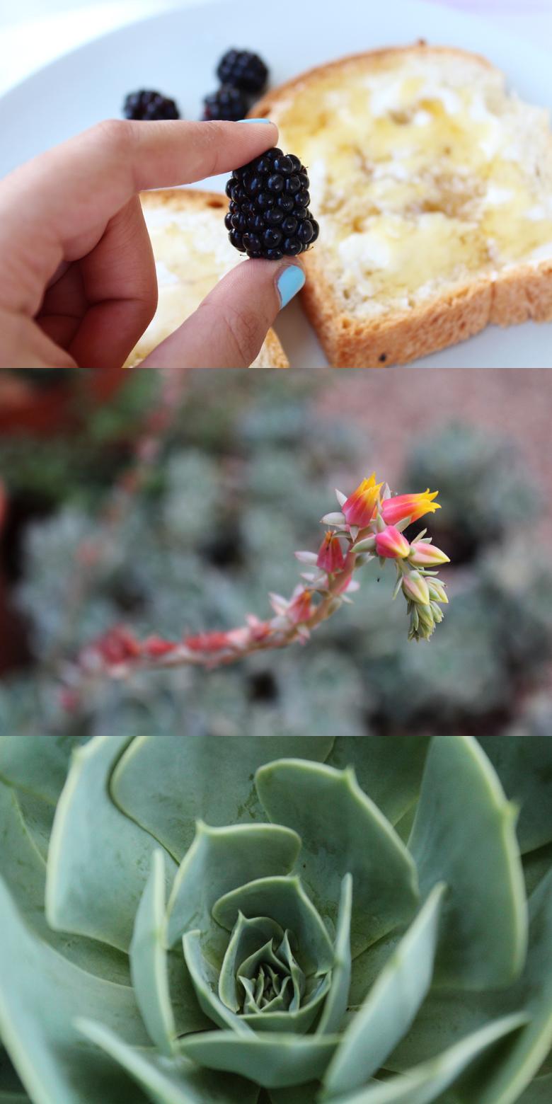 φωτογραφίες φυτών με μάκρο φακούς 2