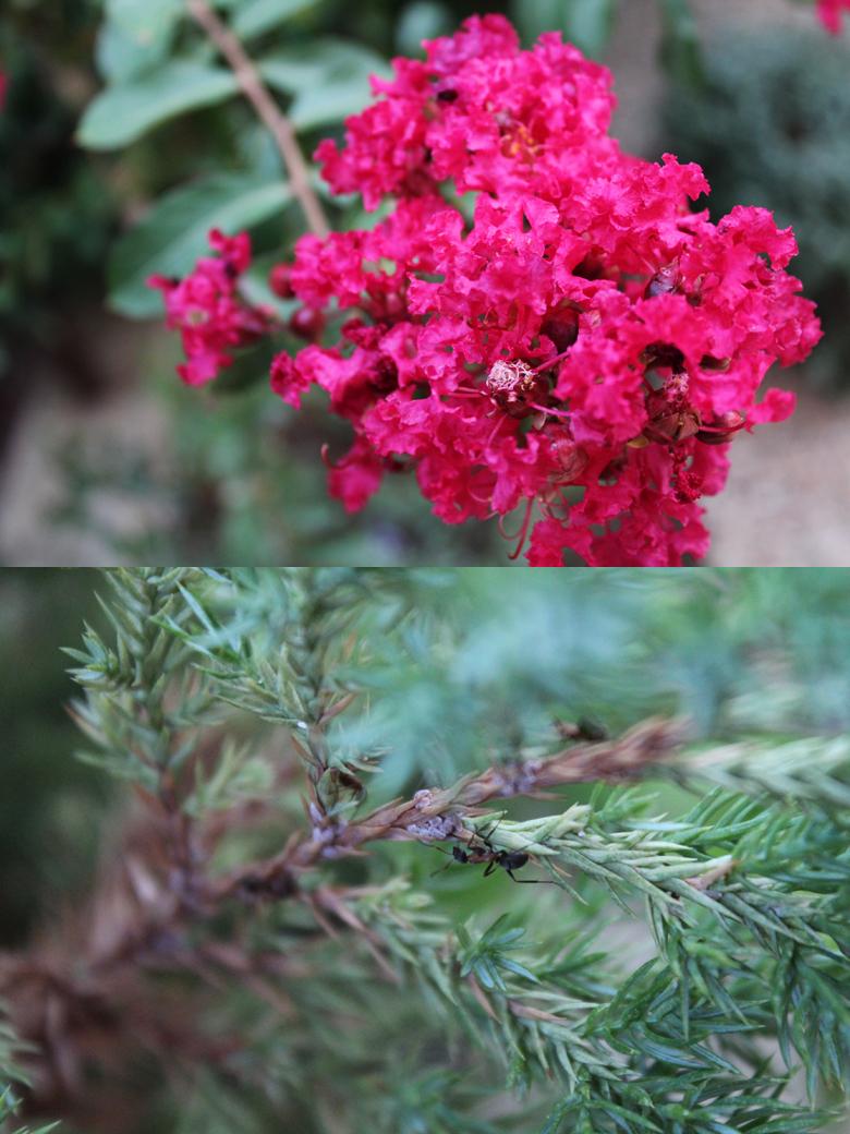 φωτογραφίες φυτών με μάκρο φακούς 3