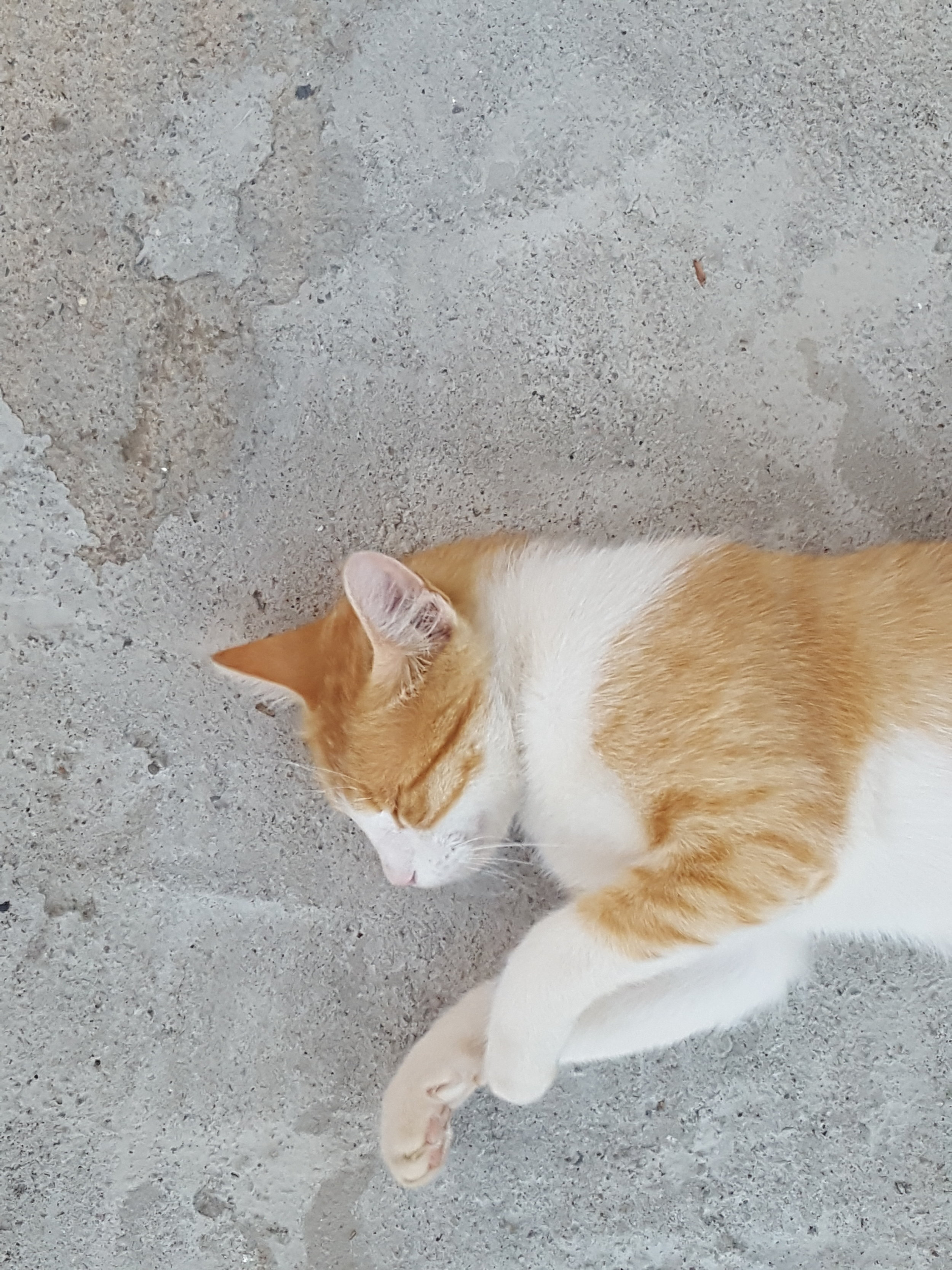 My sleeping kitty and Quick Survey: Help us become better! | from In Whirl of Inspiration