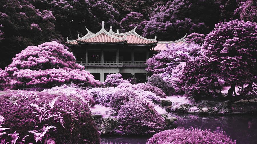 Meiji Shrine Gyoen - Infrared
