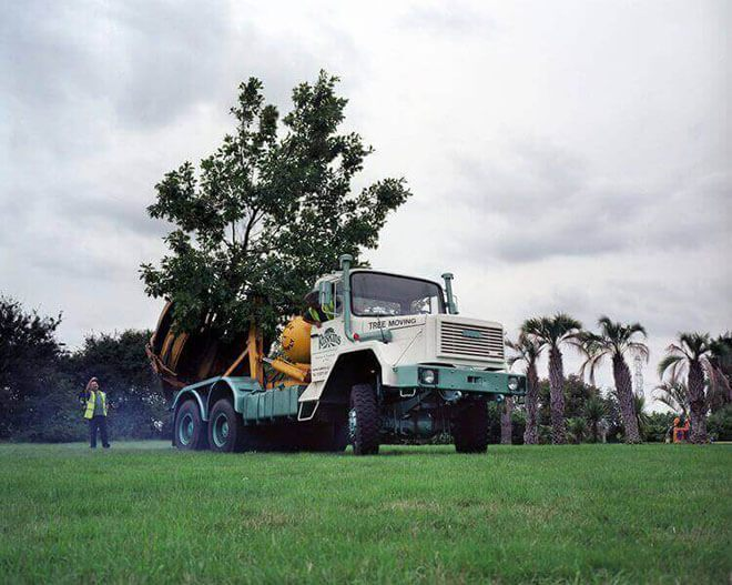 Tree Moving - Any Size Tree, Hedge or Shrub Moved — Ruskins
