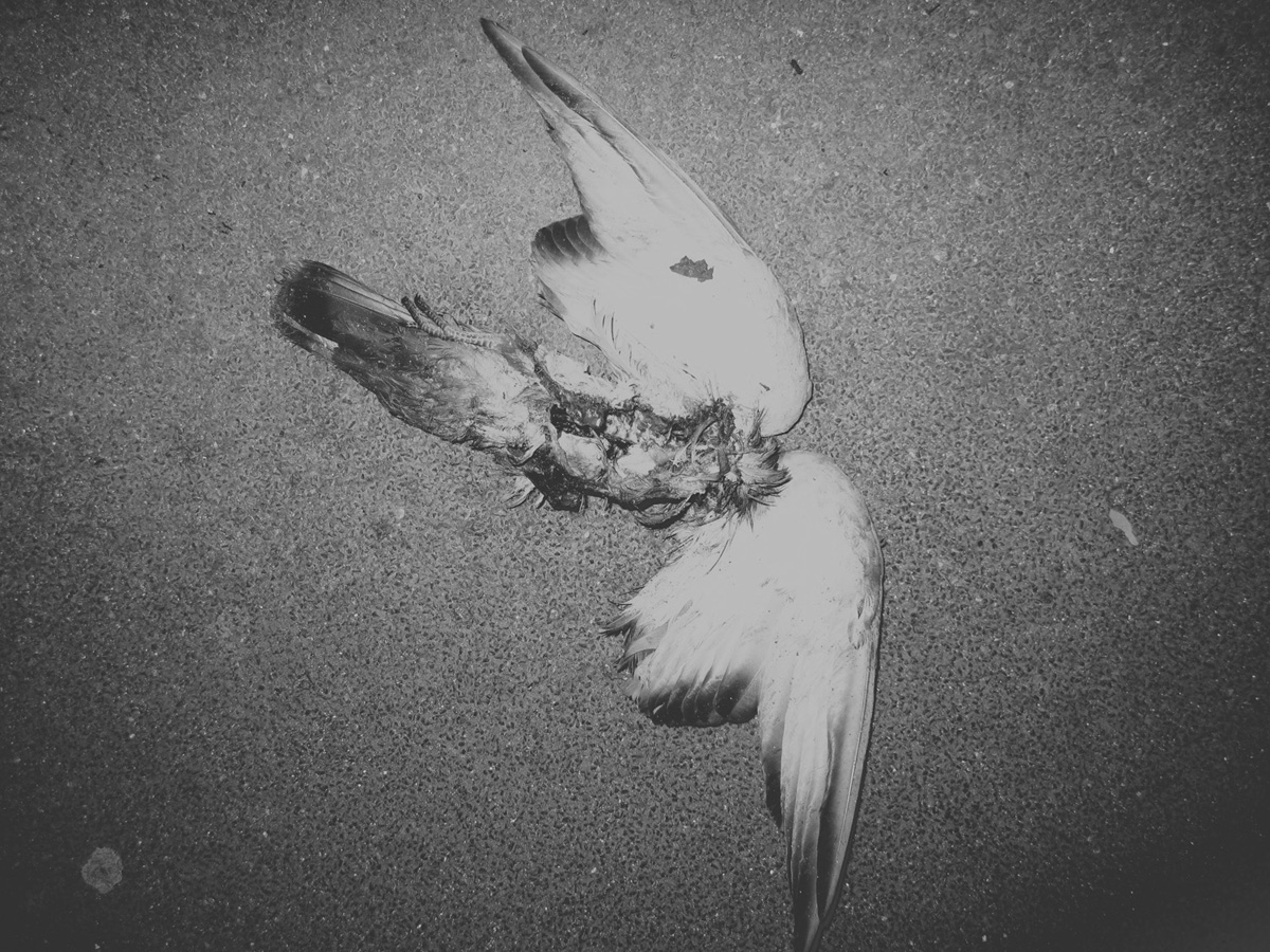 dead birdIMG_6837.jpg