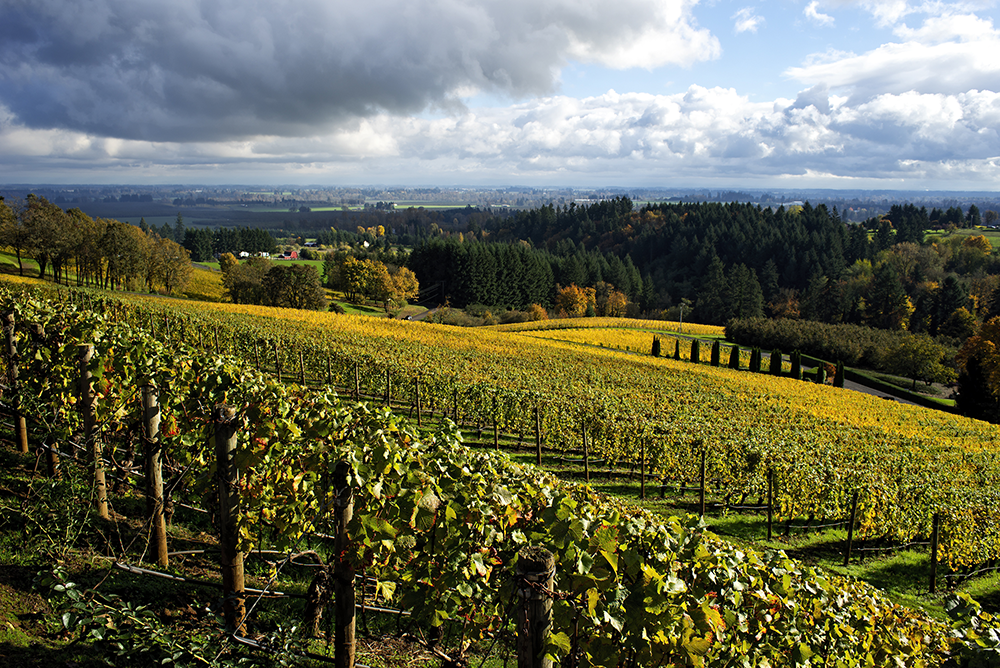 Dundee Hills Vineyards in Oregon's Beautiful Wine Country