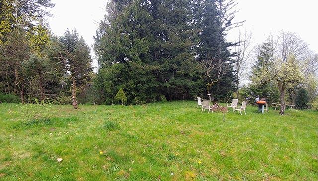 Meadow North.jpg