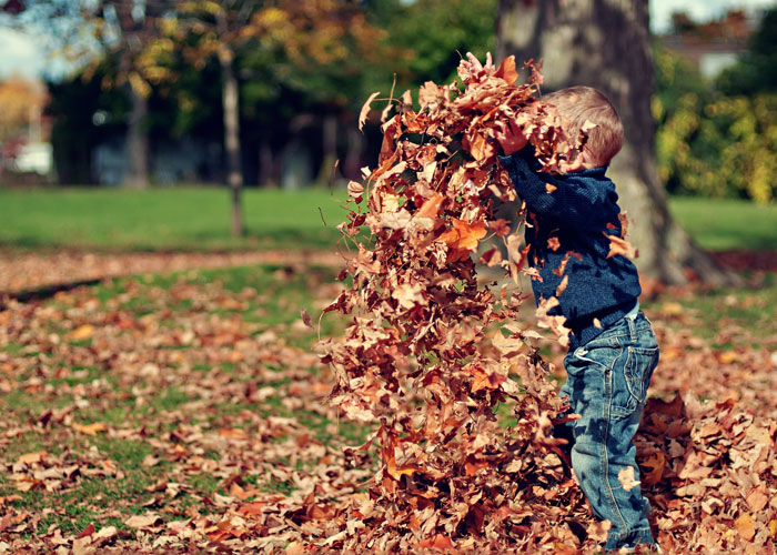 fall-fests.jpg