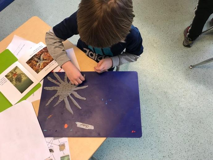 First graders created their own clay animals as part of their tide pool unit.