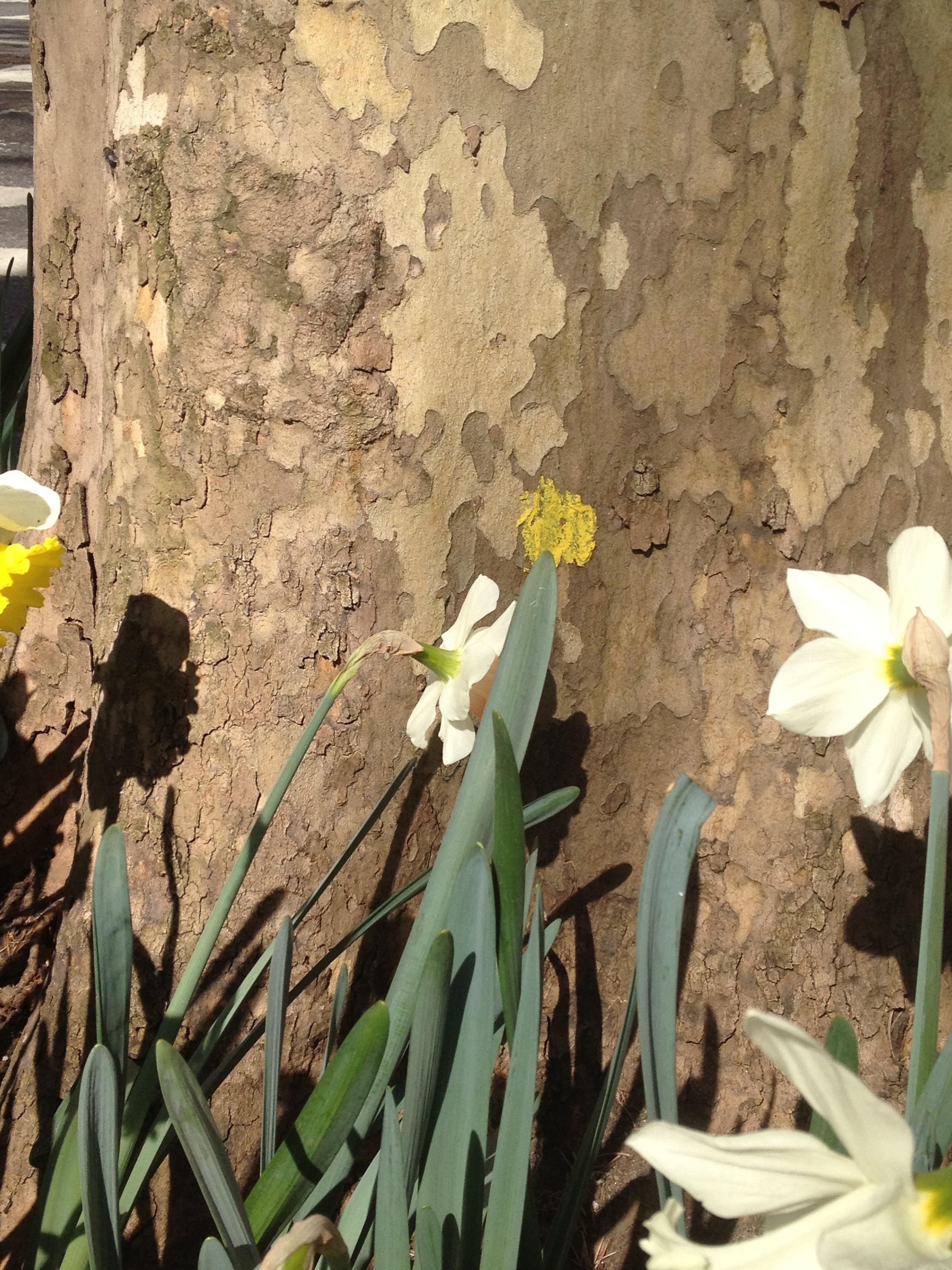 Flowers, NYC 2013