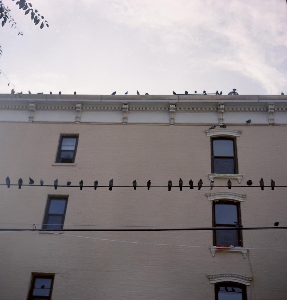 Birdcall, Brooklyn 2012