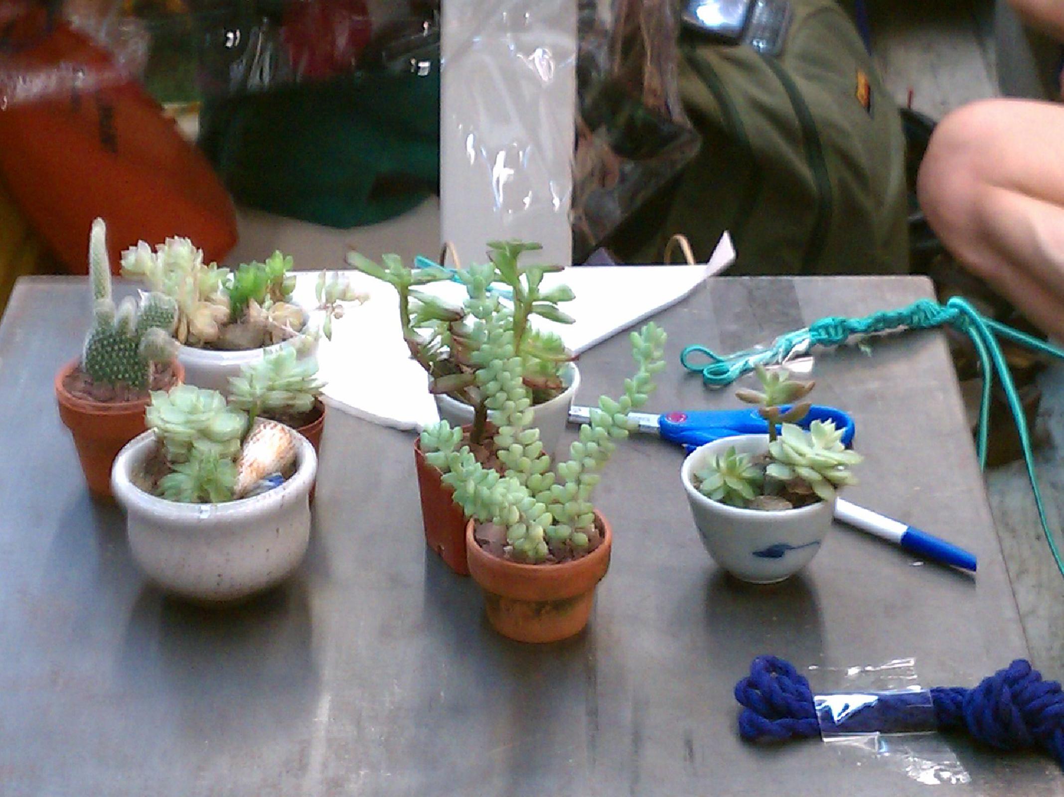 dish-gardens_6127864948_o.jpg