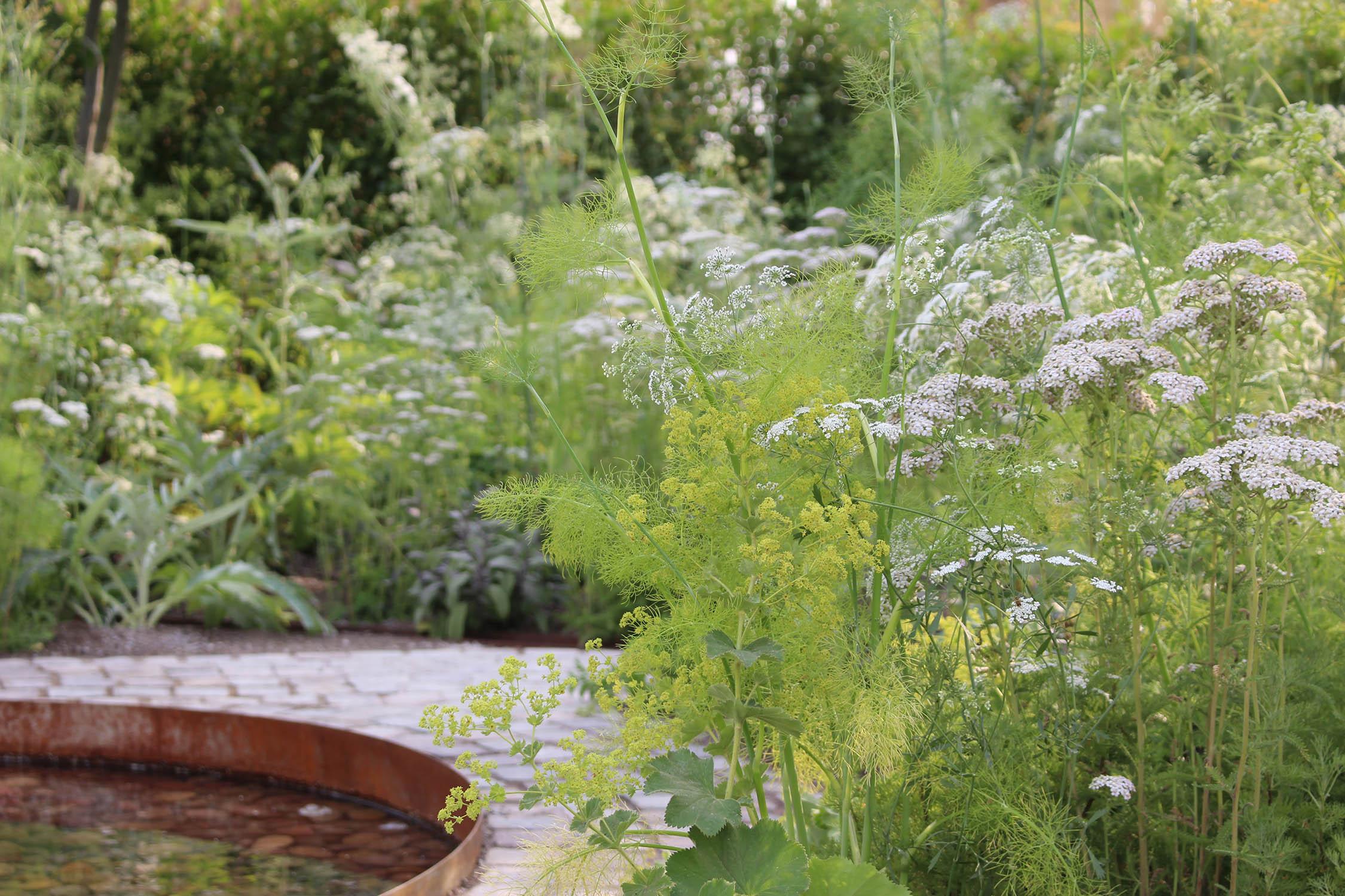 hampton-court-garden-lime-green-white-plants-flowers.jpg